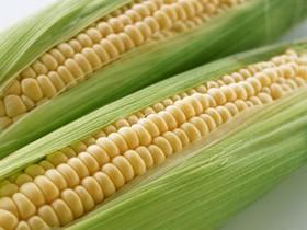 کاهش واردات ذرت و افزایش واردات برنج به ایران