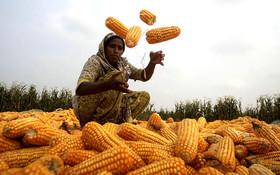 حمایت وزارت جهاد کشاورزی از طرح قیمت تضمینی در بورس کالا