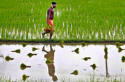 احیای بخش کشاورزی از مسیر بورس های کالایی