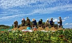 قیمت مواد غذایی و محصولات کشاورزی بر مدار رشد