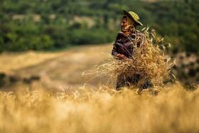 ثمرات ورود بورس کالا به حوزه کشاورزی