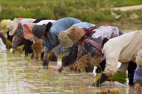 تداوم رشد قیمت مواد غذایی و محصولات کشاورزی