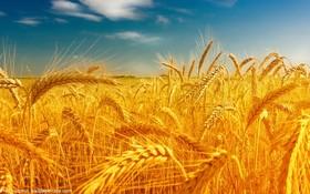 معامله ۸ هزار تن گندم خوراکی در بورس کالای ایران