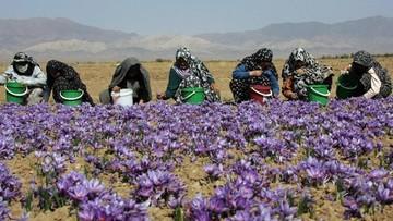 استقبال کشاورزان از معاملات آتی زعفران