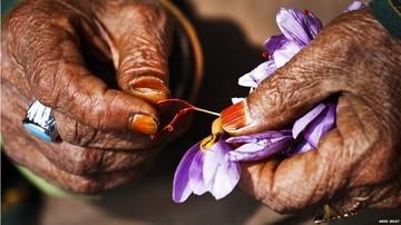 قیمت زعفران نوسانات زیادی دارد/تفاوت نرخ داخل با مقاصد صادراتی بالاست