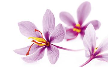 جدول روزانه معاملات زعفران در بورس کالا(۹ مرداد ماه ۹۷)
