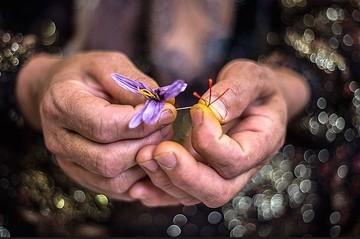 زعفران یکه تاز بازار آتی بورس کالا