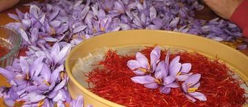انعقاد بیش از ۶۵ هزار قرارداد آتی زعفران در بورس کالا