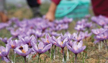 جدول روزانه معاملات زعفران در بورس کالا ( ۳ شهریور ماه ۹۷)