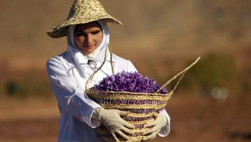 آپشن زعفران به کشاورزان قدرت انتخاب می دهد/آوازه بورس زعفران ایران در جهان