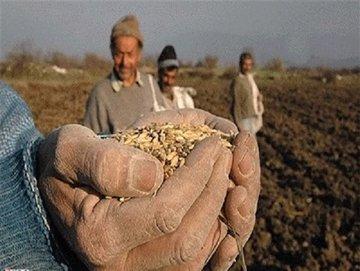 دولت خرید گندم را به بخش خصوصی واگذار کند