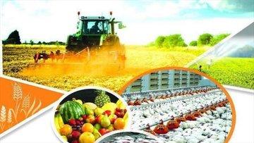 آینده تامین مالی بخش کشاورزی به گواهی سپرده کالایی متصل است
