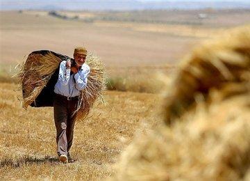 ضرورت عرضه محصولات کشاورزی در بورس کالا