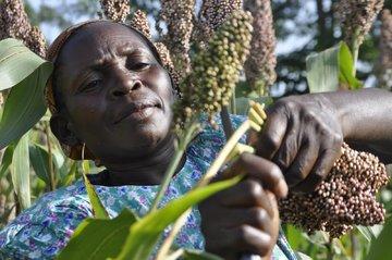 تامین مالی کشاورزان از طریق بورس کالای نیجریه