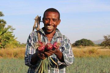 رضایت کشاورزان از معاملات قبض انبار در بورس کالای کشاورزی آفریقا