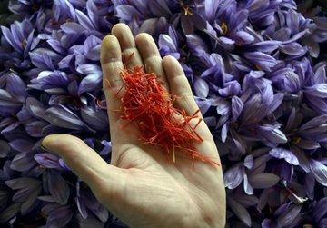 معامله ۵۳۰ کیلوگرم زعفران در بورس کالا