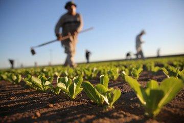 محصولات جدید کشاورزی در راه بورس کالا