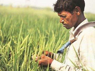 قراردادهای تحویل اجباری بر پایه تحویل متناوب در بورس کالای هند