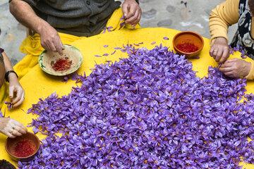 گشایش نماد گواهی سپرده زعفران پوشال یک انبار در بورس کالا