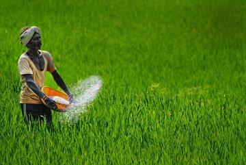 بازار کشاورزی هند از مسیر بورس کالا بین المللی می شود