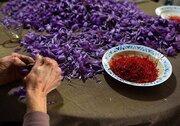 هفته زعفرانی بازار گواهی سپرده کالایی بورس کالا/نگین، صدرنشین معاملات