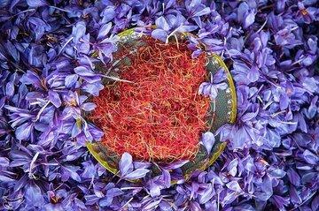 راه اندازی قرارداد اختیار معامله زعفران نگین با سررسید اردیبهشت ۱۴۰۰