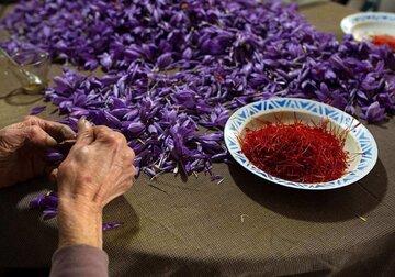 زعفران پوشال را برای تحویل آبان ۱۴۰۰ معامله کنید