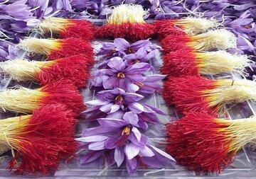 گل چین نمونه زعفران