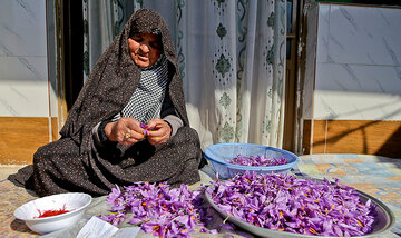 همه چیز درباره زعفران نگین/ کدام زعفران مرغوب است؟