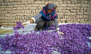 انبارهای بورسی آماده پذیرش زعفران تولید سال ۹۹