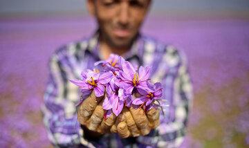 بورس کالا مرجع قیمت زعفران دنیا می شود
