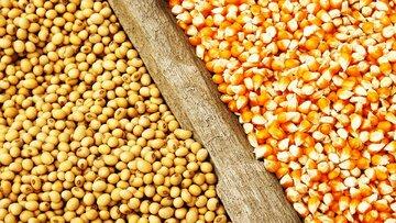 تصمیم برزیل برای لغو عوارض واردات دانه های ذرت و سویا