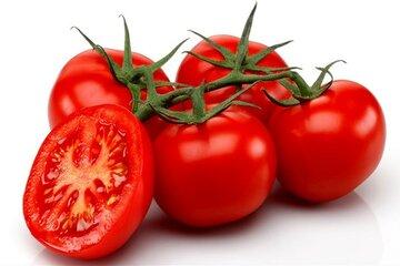خرید حمایتی ۲۶ هزار تن گوجه از کشاورزان با کمک سازوکار بورس کالا