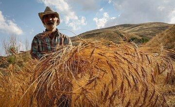 لزوم اجرای طرح قیمت تضمینی محصولات کشاورزی در بورس کالا