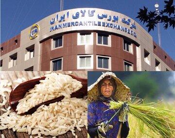 استانداردسازی، نظارت و تضمین کیفیت برنج با ورود به بورس کالا