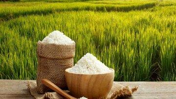 عطر برنج طارم در بورس کالا پیچید